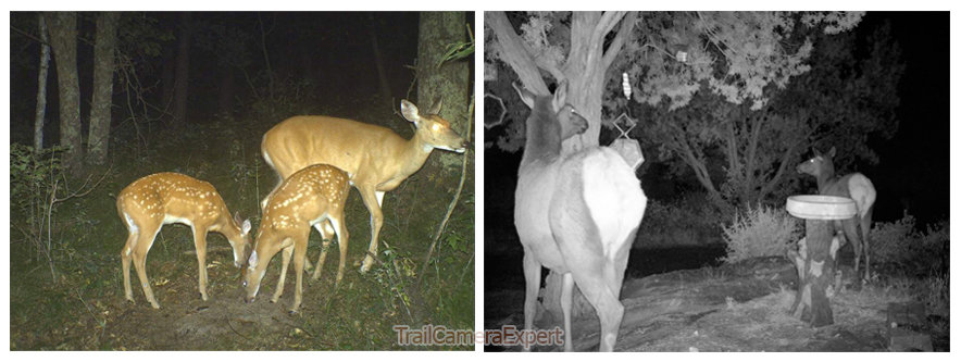 trail-camera-flash-and-night-vision