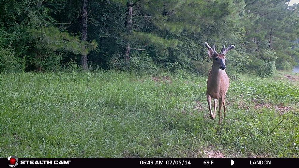 How To Choose The Best Deer Trail Camera