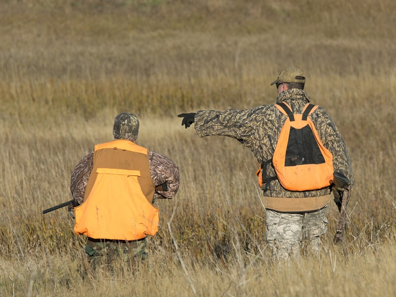 Hunters walking looking for upland bird game