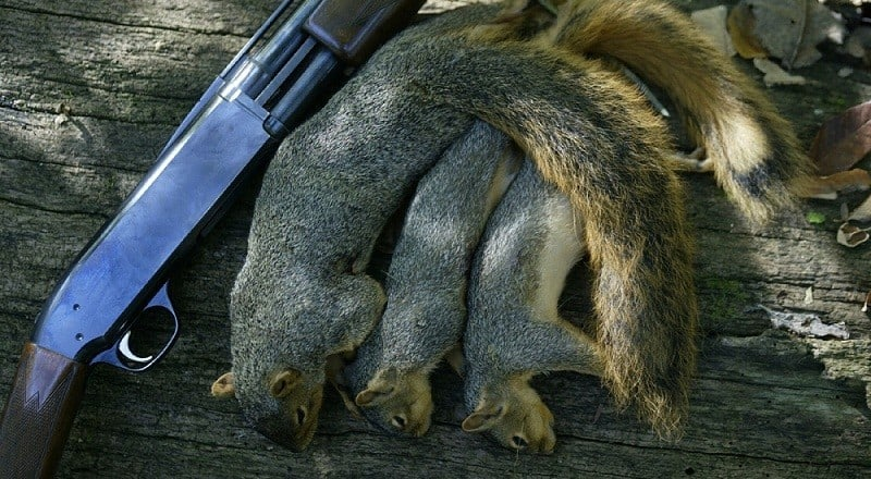 Best Squirrel Hunting Tips
