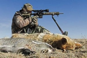 Coyote Hunting Tips and Tactics
