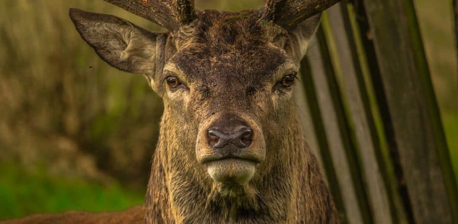 Tips To Capture Better Trail Camera Images